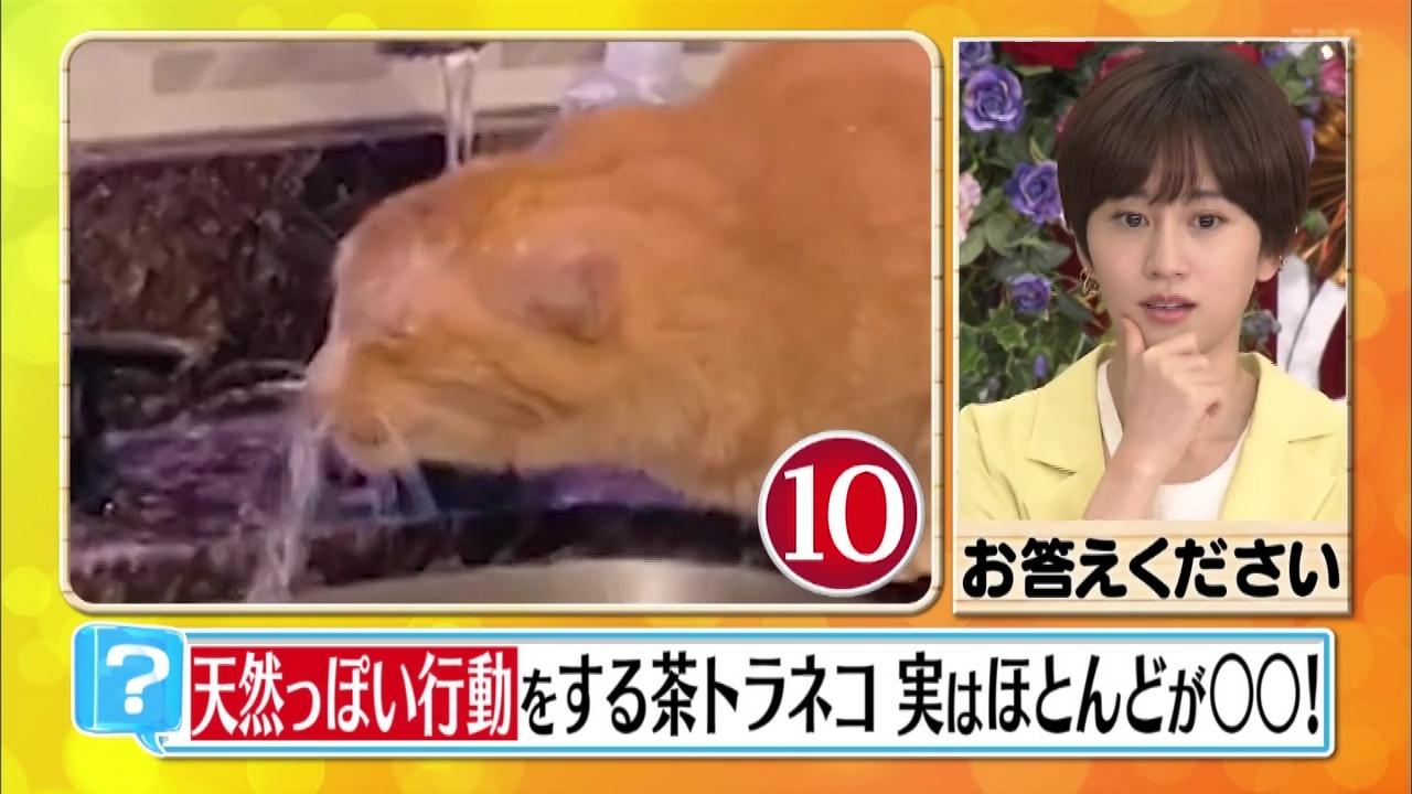 100 動物 連発 スクープ