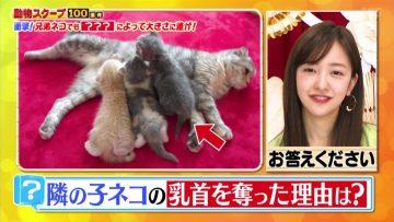 210429 Waraeru! Nakeru! Doubutsu Scoop 100 Renpatsu – ex-AKB48 Itano Tomomi – HD.mp4-00006