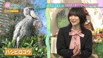 211026 Numa ni Hamatte Kiite Mita – Hinatazaka46 Morita Hikaru – HD.mp4-00005